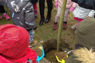 Sadzenie drzewek z okazji 100 lecia Niepodległości Polski